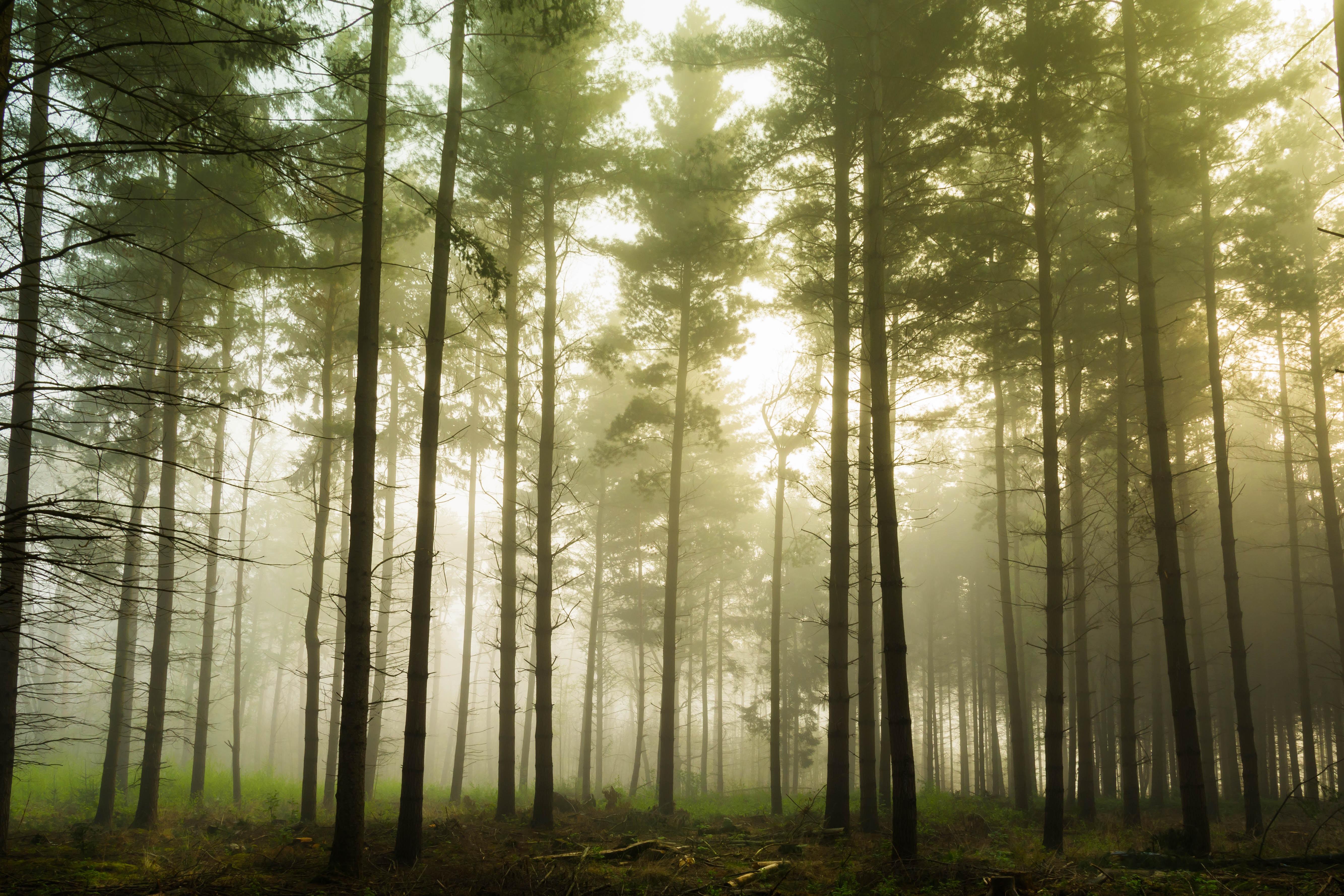 Støt regnskoven i din e-handel